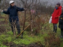 Pruning talk 10-02-18_05