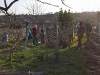 Pruning talk 16-02-18_09