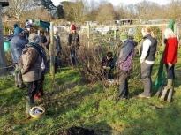 Pruning talk 16-02-18_12