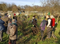 Pruning talk 16-02-18_13