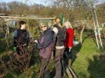 Pruning talk 16-02-18_15