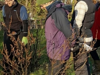 Pruning talk 16-02-18_16