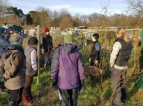 Pruning talk 16-02-18_17